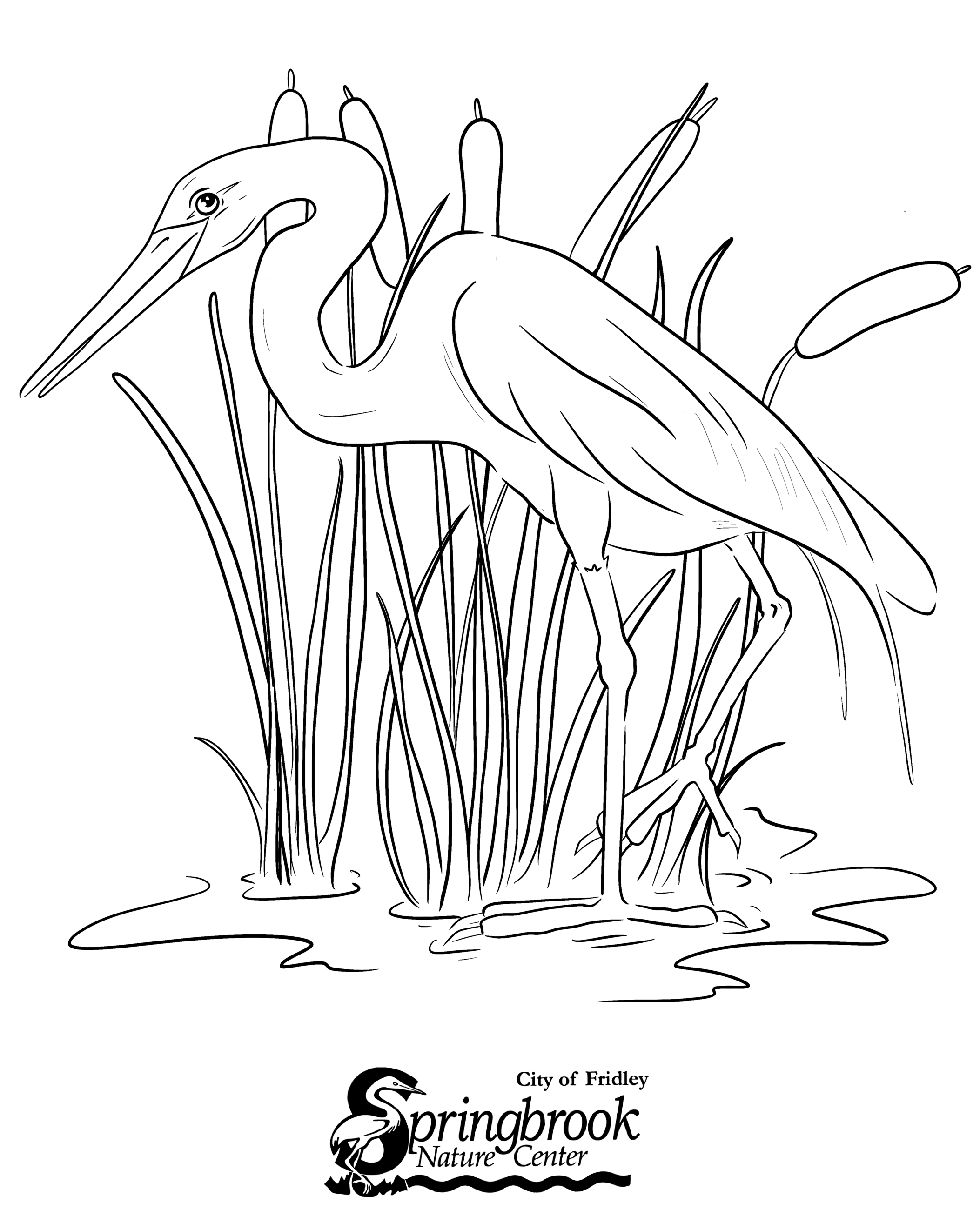 Egret Coloring Page Opens in new window