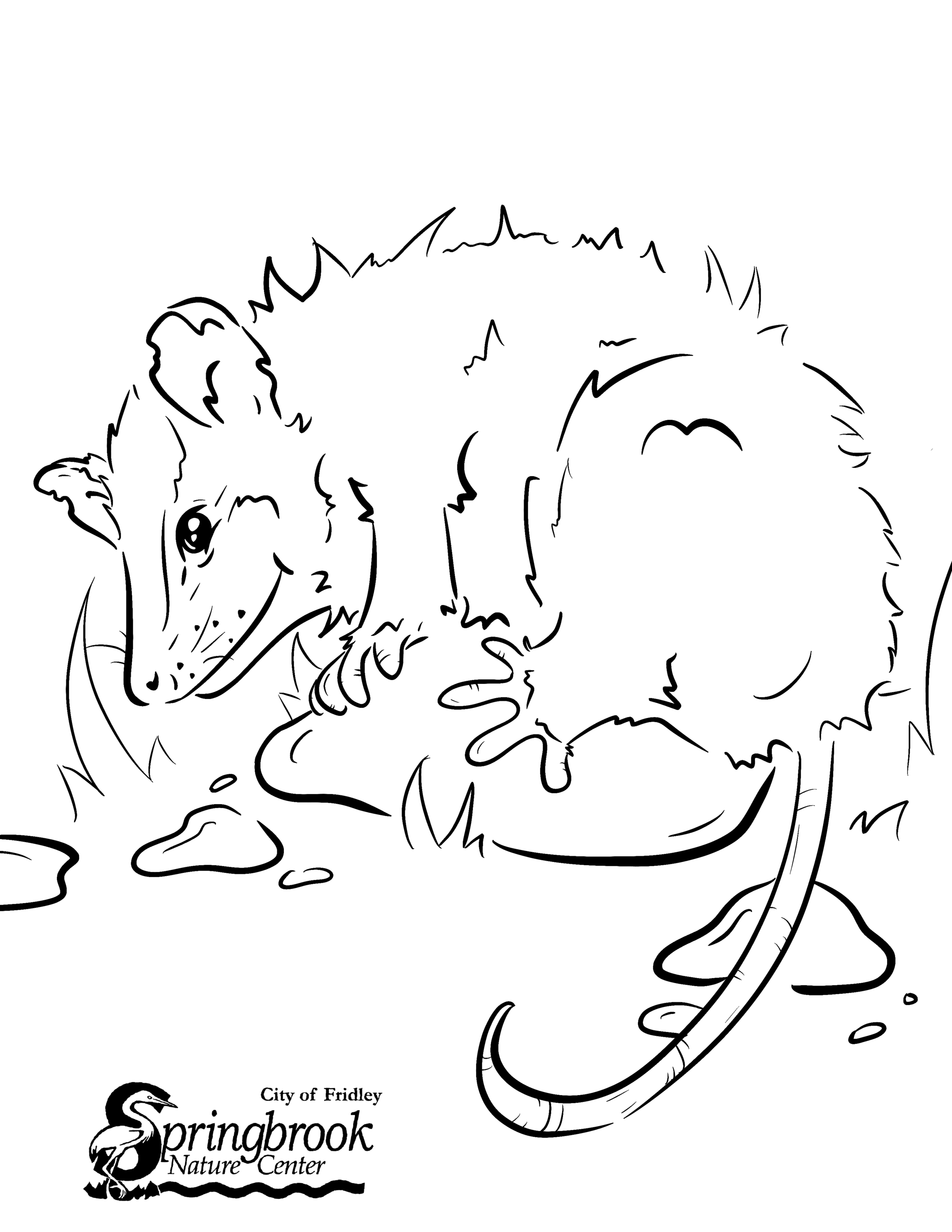 Opossum Coloring Page Opens in new window