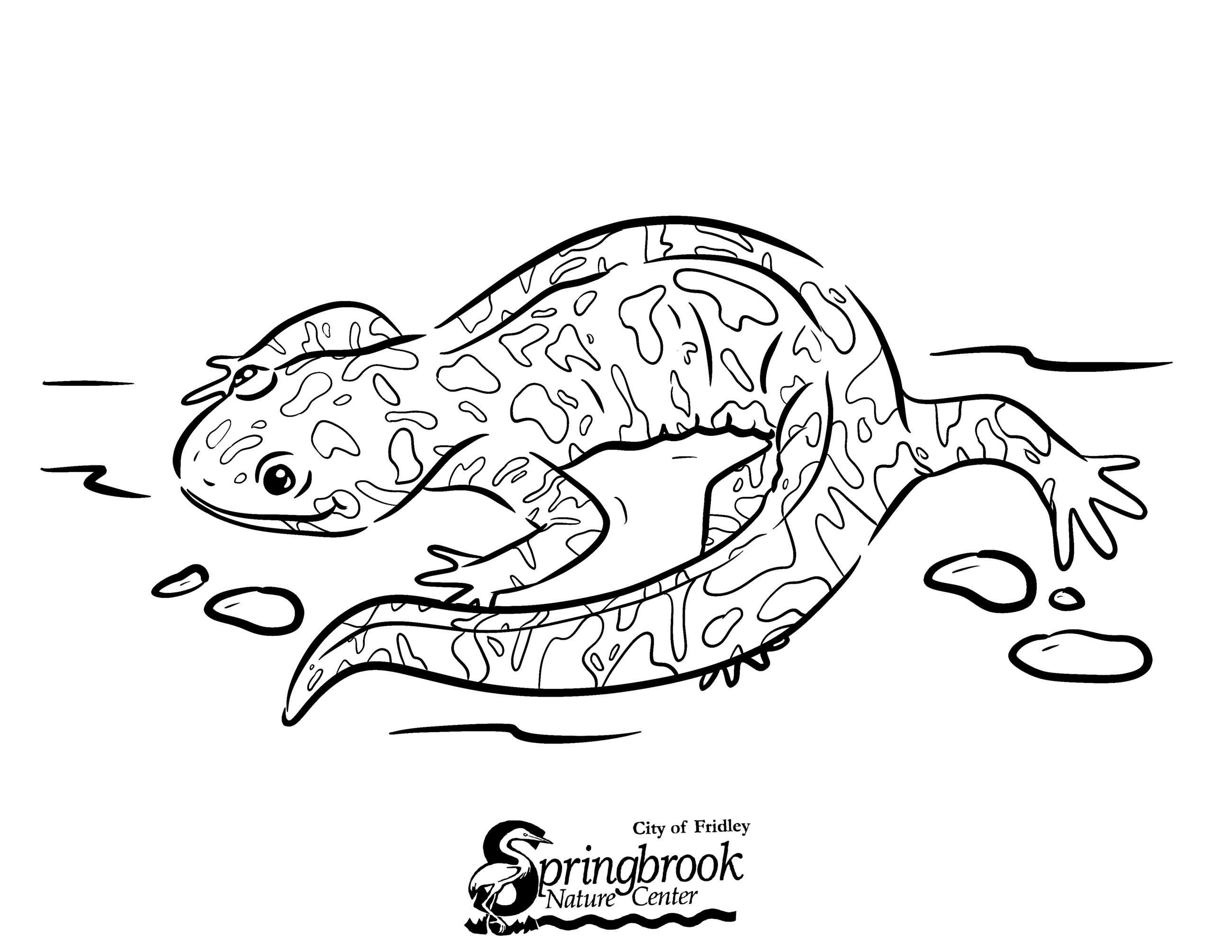 Salamander Coloring Page Opens in new window